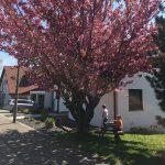 Tagesmutter Weinsberg Haus von außen
